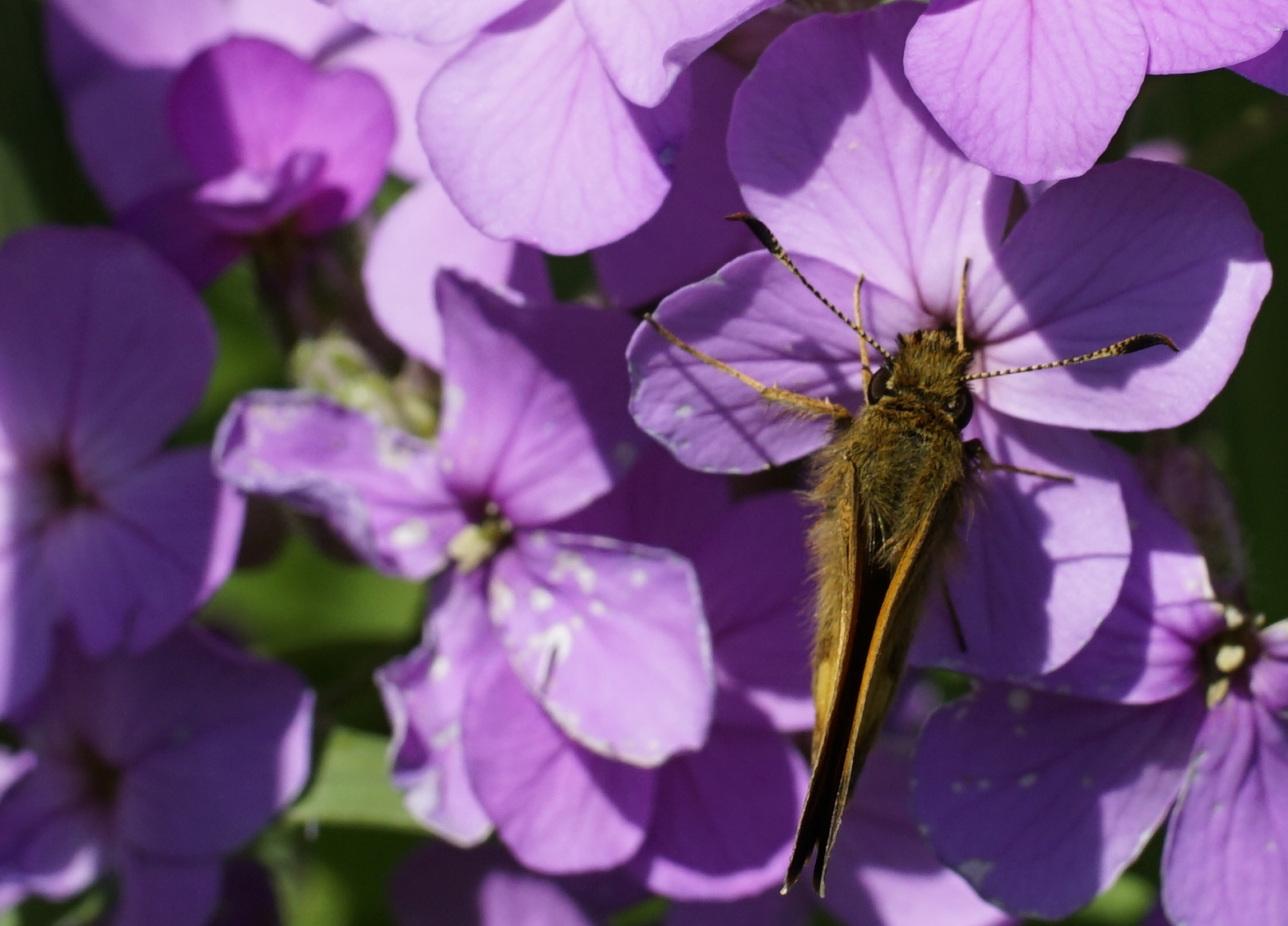 flowerbug43.jpg